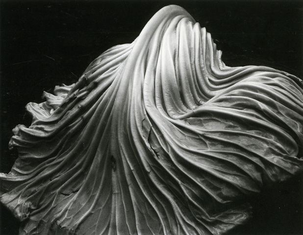 Edward Weston, Cabbage Leaf, 1931, Sammlung FOTOGRAFIS, Bank Austria Kunstsammlung, Wien, © Center for Creative Photography, Arizona, Foto © Hubert Auer